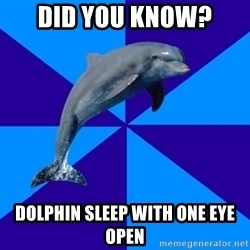 Drama Dolphin - DID YOU KNOW? dolphin sleep with one eye open