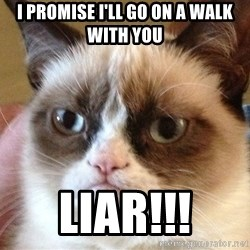 Angry Cat Meme - I promise I'll go on a walk with you LIAR!!!