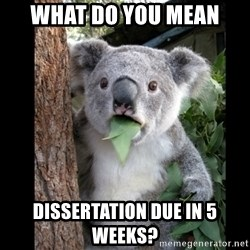 Koala can't believe it - WHAT DO YOU MEAN DISSERTATION DUE IN 5 WEEKS?