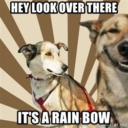Stoner dogs concerned friend - HEY LOOK OVER THERE IT'S A RAIN BOW