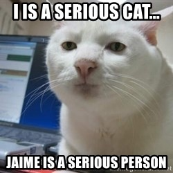 Serious Cat - I is a Serious Cat... Jaime is a Serious Person