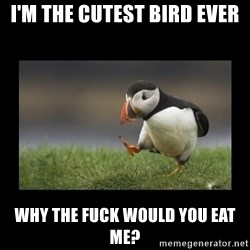 Shufflin' Puffin - I'm the cutest bird ever Why the fuck would you eat me?