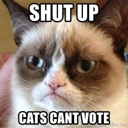 Angry Cat Meme - SHUT UP CATS CANT VOTE