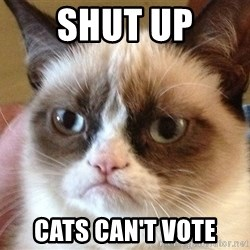 Angry Cat Meme - SHUT UP cats can't vote