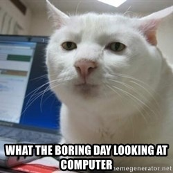 Serious Cat -  what the boring day looking at computer