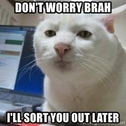 Serious Cat - Don't worry brah  I'll sort you out later