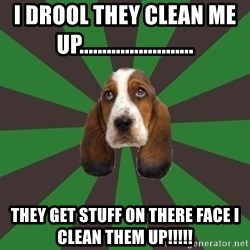 Broke College Student Basset - I drool they clean me up......................... They get stuff on there face I clean them up!!!!!