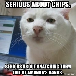 Serious Cat - Serious about chips. Serious about snatching them out of Amanda's hands.