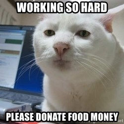 Serious Cat - Working so hard Please donate food money