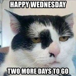 Serious Cat - happy wednesday two more days to go