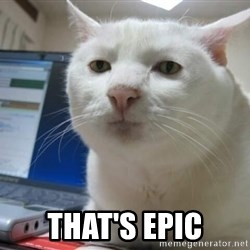 Serious Cat -  That's epic