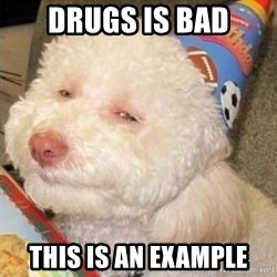 Troll dog - drugs is bad this is an example