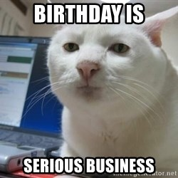 Serious Cat - Birthday is serious business