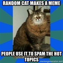 AMBER DTES VANCOUVER - random cat makes a meme people use it to spam the hot topics