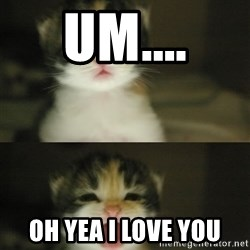 Adorable Kitten - um.... oh yea i love you