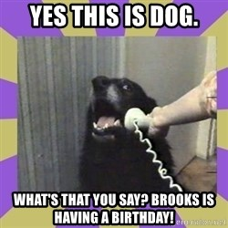 Yes, this is dog! - Yes this is dog. What's that you say? Brooks is having a birthday!
