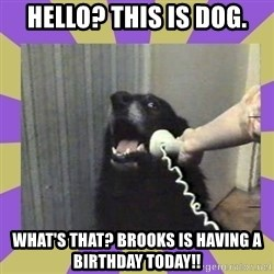 Yes, this is dog! - Hello? This is dog. What's that? Brooks is having a birthday today!!