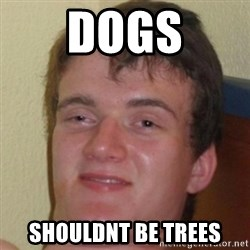 10guy - Dogs Shouldnt be trees