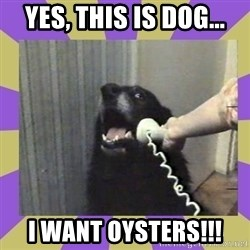 Yes, this is dog! - Yes, this is dog... I want oysters!!!