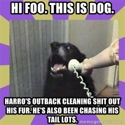 Yes, this is dog! - Hi Foo. This is dog. Harro's outback cleaning shit out his fur. He's also been chasing his tail lots.