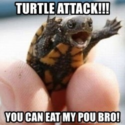 angry turtle - TURTLE ATTACK!!! YOU CAN EAT MY POU BRO!