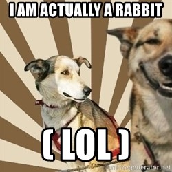 Stoner dogs concerned friend - i am actually a rabbit ( lol )