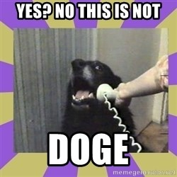 Yes, this is dog! - YES? NO THIS IS NOT DOGE