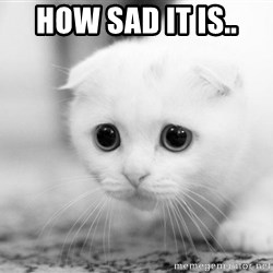 Sadcat - HOW SAD IT IS..