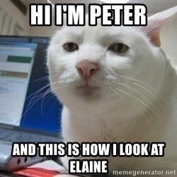 Serious Cat - hi i'm peter and this is how i look at elaine
