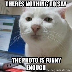 Serious Cat - theres nothing to say  the photo is funny enough