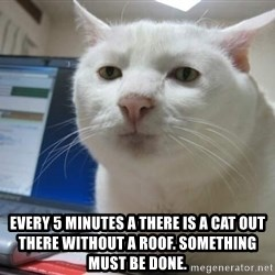 Serious Cat -  Every 5 minutes a there is a cat out there without a roof. Something MUST be done.