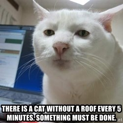 Serious Cat -  There is a cat without a roof every 5 minutes. Something MUST be done.