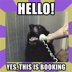 Yes, this is dog! - Hello! Yes, this is Booking