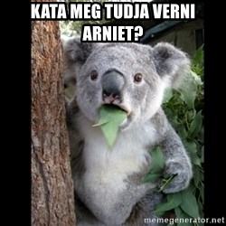 Koala can't believe it - Kata meg tudja verni Arniet?