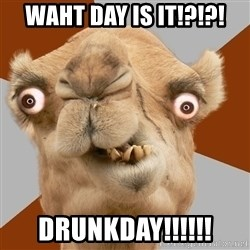 Crazy Camel lol - waht day is it!?!?! DRUNKDAY!!!!!!