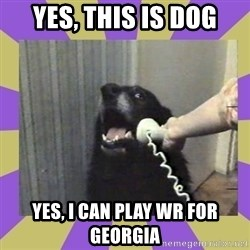Yes, this is dog! - Yes, this is dog Yes, I can play WR for Georgia
