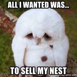 Sad Owl Baby - All I wanted was... to sell my nest