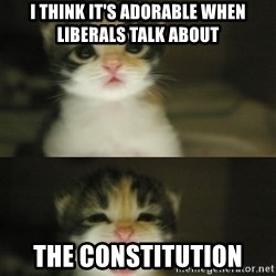Adorable Kitten - I think it's adorable when liberals talk about The constitution