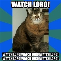 AMBER DTES VANCOUVER - WATCH LORO! WATCH LORO!WATCH LORO!WATCH LORO!WATCH LORO!WATCH LORO!WATCH LORO!