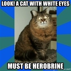 AMBER DTES VANCOUVER - Look! A Cat with White Eyes Must Be Herobrine