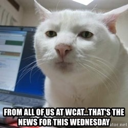 Serious Cat -  from all of us at wcat...that's the news for this wednesday
