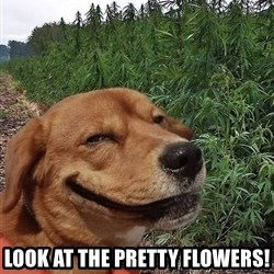dogweedfarm -  look at the pretty flowers!