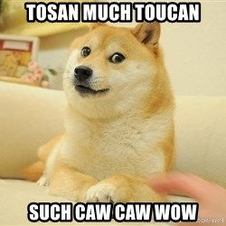 wow such doges - Tosan much toucan such caw caw wow
