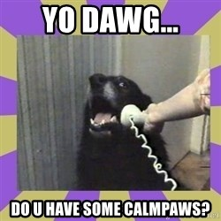 Yes, this is dog! - Yo dawg... Do u have some calmpaws?