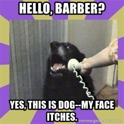 Yes, this is dog! - Hello, barber? Yes, this is dog--my face itches.