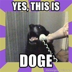 Yes, this is dog! - YES, THIS IS DOGE