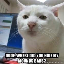 Serious Cat -  dude, where did you hide my mounds bars?
