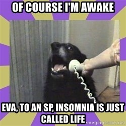 Yes, this is dog! - of course i'm awake eva, to an sp, insomnia is just called life