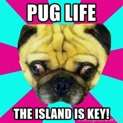 Perplexed Pug - PUG LIFE The island is key!