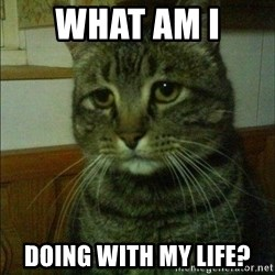 Depressed cat 2 - What am I  Doing with my life?